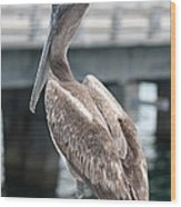 Sweet Brown Pelican - Digital Painting Wood Print