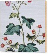 Sweet Canada Raspberry Wood Print