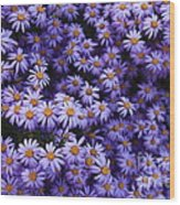 Sweet Dreams Of Purple Daisies Wood Print