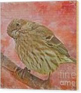 Sweet Female House Finch 3 - Digital Paint Wood Print