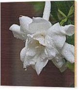 Sweet Gardenia Rain Wood Print