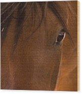 Sweet Horse Face Wood Print