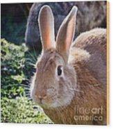 Sweet Little Bunny Wood Print