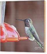 Sweet Little Hummingbird On Feeder Wood Print