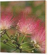 Sweet Mimosa Wood Print