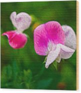 Sweet Pea Blossoms Wood Print