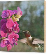 Sweet Pea Hummingbird Wood Print