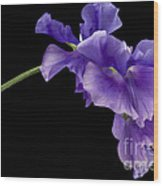 Sweet Pea Study Wood Print by Anne Gilbert