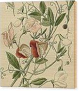 Sweet Peas Wood Print