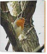 Sweet Robin Wood Print