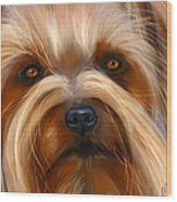 Sweet Silky Terrier Portrait Wood Print