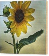 Sweet Summer Sunflower Wood Print