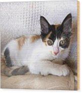 Sweet The Kitten Wood Print