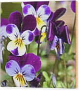 Sweet Viola Wood Print