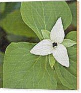 Sweet White Trillium Wood Print