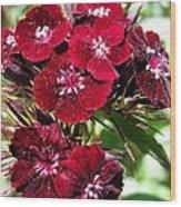 Sweet William Named Sooty Wood Print