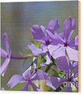 Sweet William Purple Wildflower Springtime Wood Print