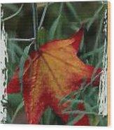 Sweetgum Leaf Wood Print