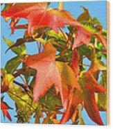 Sweetgum Leaves In Autumn Wood Print