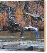 Sweetwater Heron In Flight Wood Print
