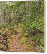 Swim Lake Trail Wood Print