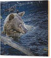 Black Bear On Blue Wood Print
