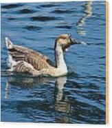 Swimming African Brown Goose Wood Print