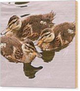 Swimming Ducklings Wood Print