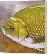 Swimming Fish  Wood Print