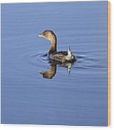 Swimming Grebe Wood Print