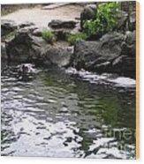 Swimming Hippo Wood Print