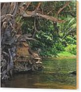 Swimming Hole Wood Print