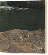 Swimming Hole  Wood Print by Tim Rice