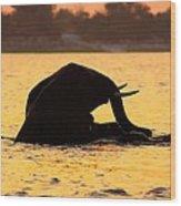 Swimming Kalahari Elephants Wood Print
