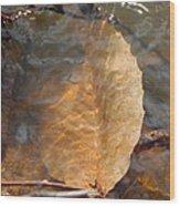 Swimming Leaf Wood Print