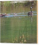 Swimming Lessons 3 Wood Print by Tanya Jacobson-Smith