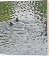 Swimming Lessons Wood Print