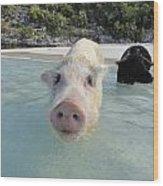 Swimming Pigs Wood Print