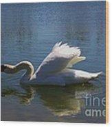 Swimming Swan Wood Print