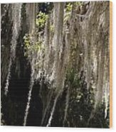Swinging Spanish Moss Wood Print