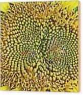 Swirling Sunflower Bloom Wood Print