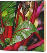 Swiss Chard Forest Wood Print