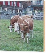 Swiss Cows Wood Print