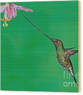 Sword-billed Hummer Wood Print