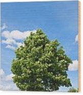 Sycamore  Acer Pseudoplatanus Wood Print