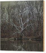 Sycamore Dancer Wood Print