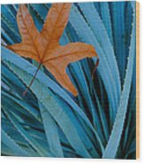 Sycamore Leaf And Sotol Plant Wood Print