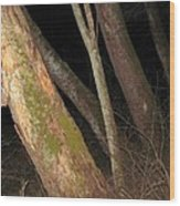 Sycamore Nightscape Wood Print