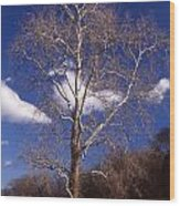 Sycamore On The Hill Wood Print