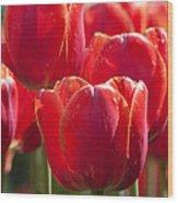 Symbolic Tulips Wood Print